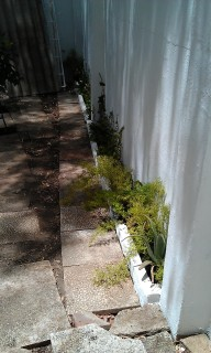 Limpieza, arriate de ladrillos, pintura, colocación de plantas