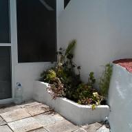 Limpieza, arriate de ladrillos, pintura en blanco y rojo, colocación de plantas